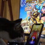 【動画】猫がガチャを引けばオニャンコポンが絶対に出る?【モンスト】